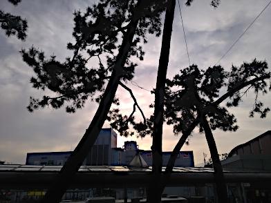 初甲子園球場